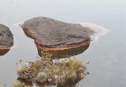 Det vegetação lago.JPG