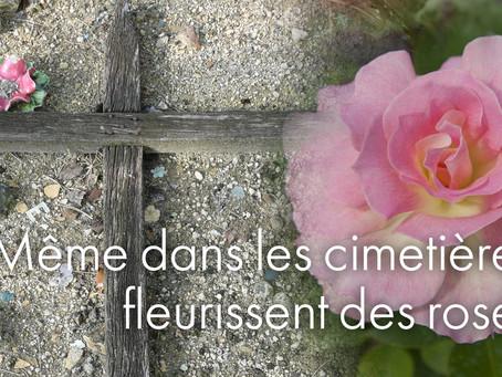 Même dans les cimetières fleurissent des roses.