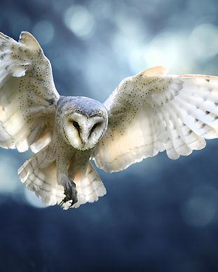 Night Owl.jpeg