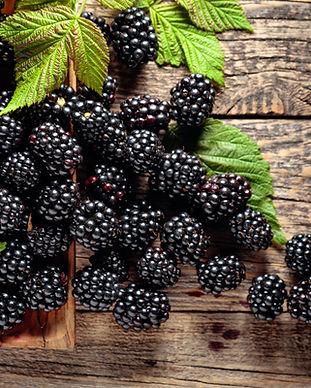 Blackberry Cobbler.jpeg