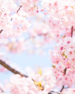 Spring Blossoms.jpeg