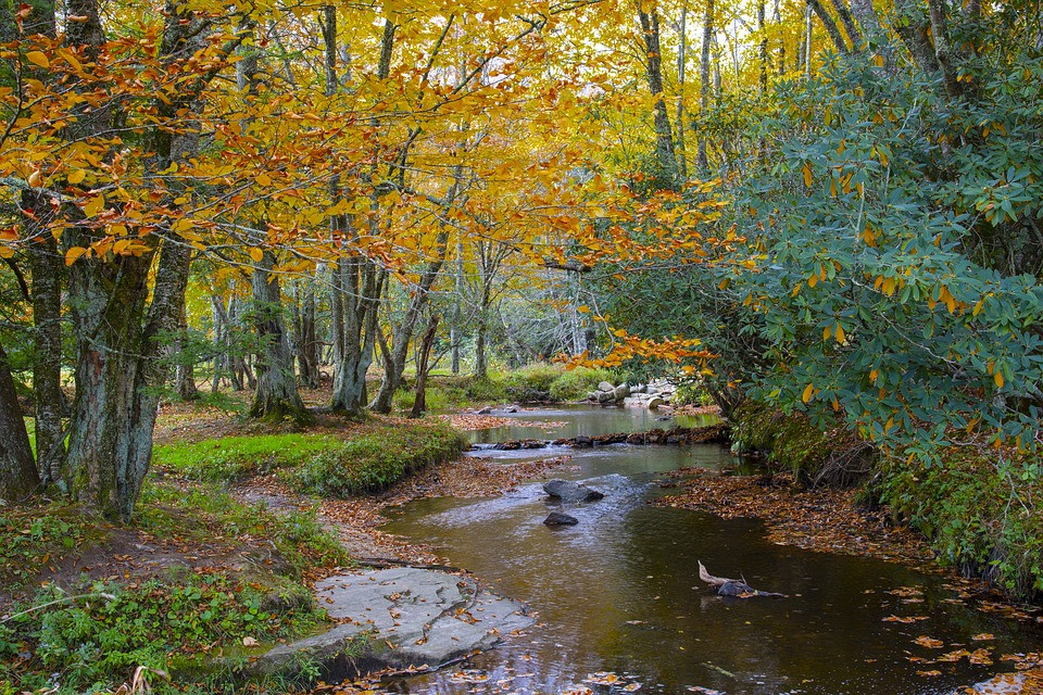Small Creek in Toccoa Georgia