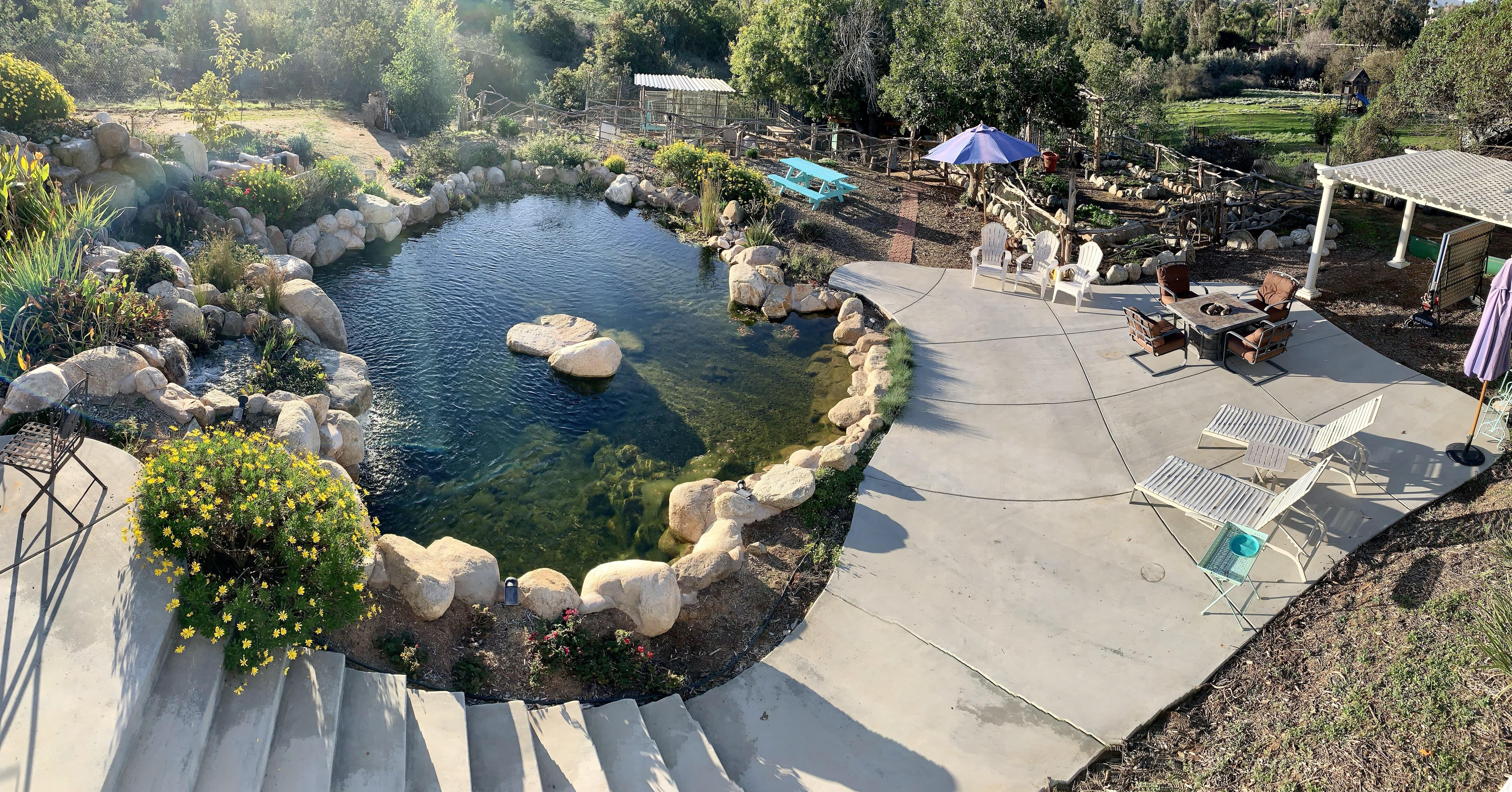 Creating a Backyard Homestead