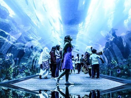 Book Tickets: Dubai Aquarium and Underwater Zoo