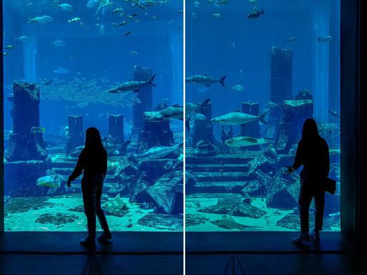 Book Tickets: Lost Chambers Aquarium in Atlantis, The Palm Dubai