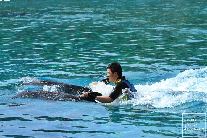 dubai dolphin experience at atlantis the palm