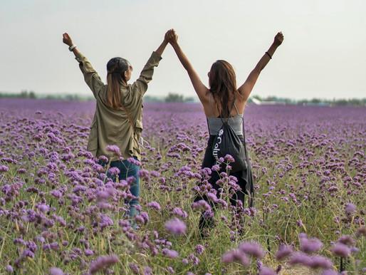 Purple Fields at Jin Sha Island in Zhongwei, Ningxia