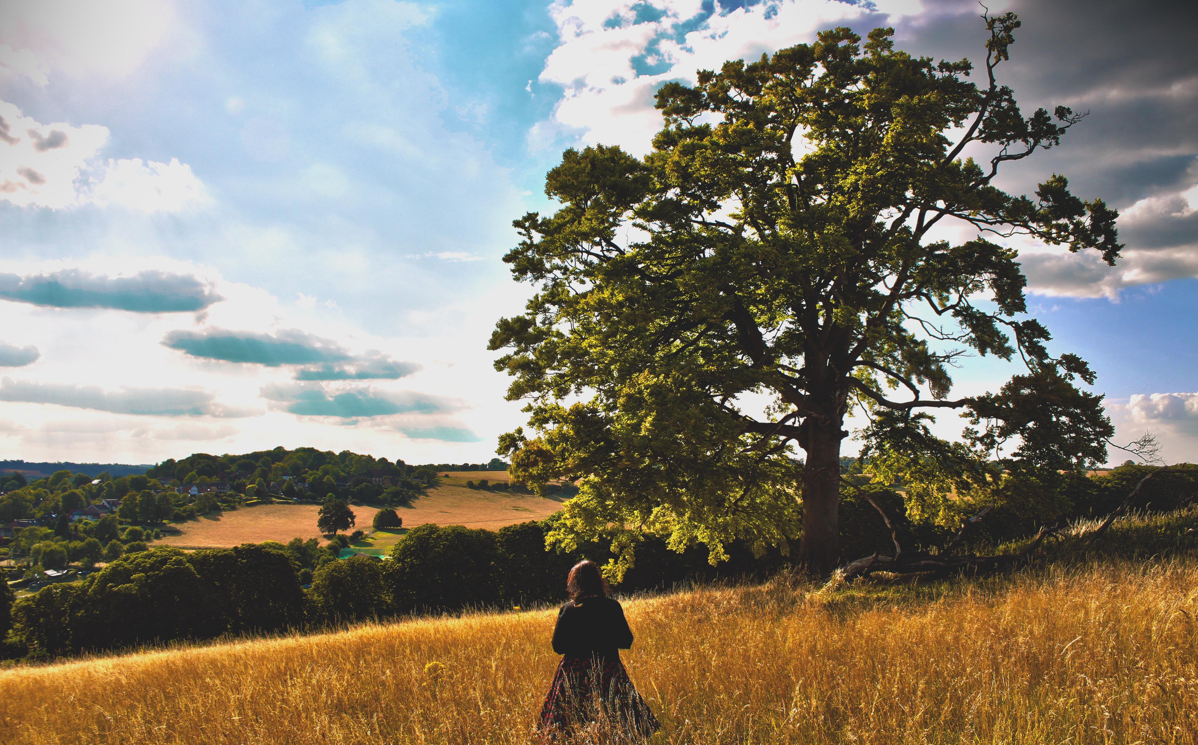 Micci Tree