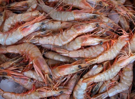 Shrimp w/head