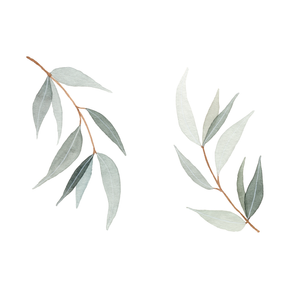 Eukalyptuszweige.png