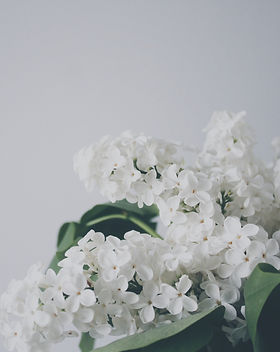 White lilac_edited.jpg