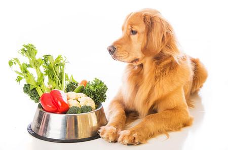 verduras-perro-dieta-casera.jpg