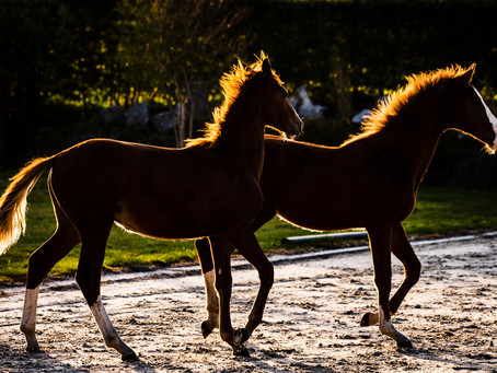 Probiotics - a healthy environment for your horse.