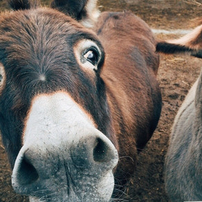 Balaam & the Talking Donkey (Numbers 22-24)