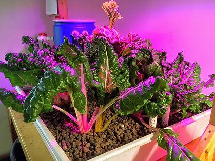 maine indoor agriculture