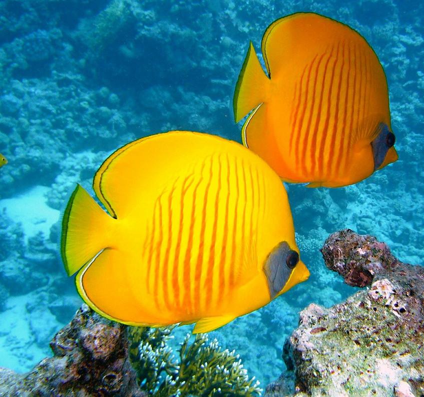 visiter un aquarium