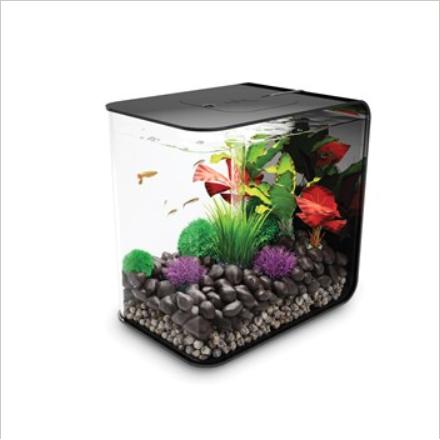 aquarium rectangle