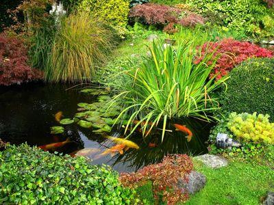 241813_se-creer-un-jardin-d-eau-les-conseils-du-paysagiste
