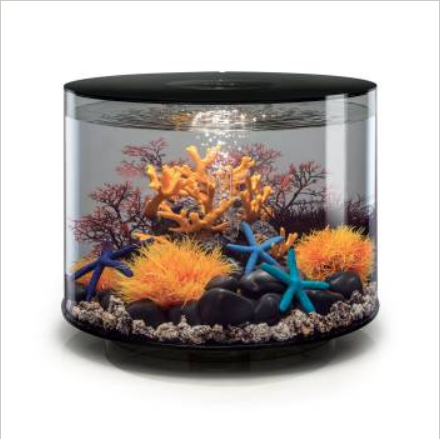 aquarium rond noir