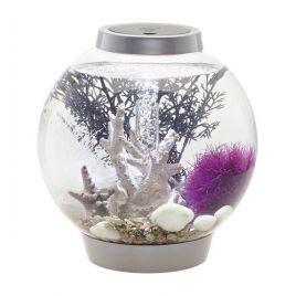 L'aquarium  serait-il bénéfique pour notre santé ?