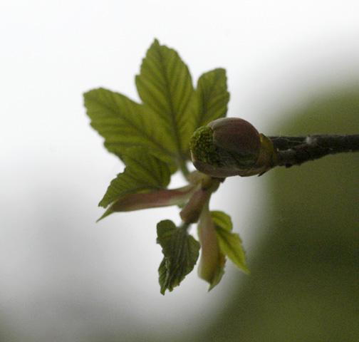 Pflanzarbeiten, das aus Ihrem Baum w