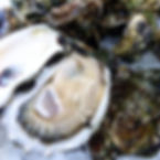 Fresh shucked oyster on the half shell!