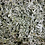 Thumbnail: Vitamin Sage Herb Sage Organic Natural Herbal Medicine Dry Herbs Tea Sage Tea