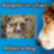 adopter un chien Hawkesbury