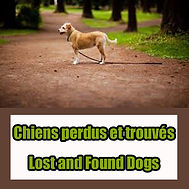 Chiens perdus et trouves a Hawkesbury, Hawkesbury lost and found dogs