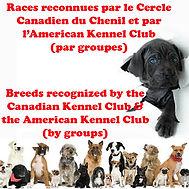 races des chiens