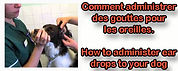 comment mettre des gouttes dans les oreilles de votre chien