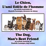 Le chien, l'ami fidele de l'homme