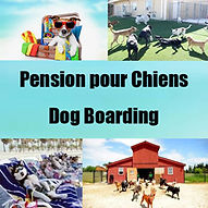 Pension pour chiens a Hawkesbury, Hawkesbury Dog Boarding