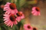 Homeopathy remedies | Empowering Better Health | Columbus Ohio | Ohio | Homeopathy | Deb Holcomb
