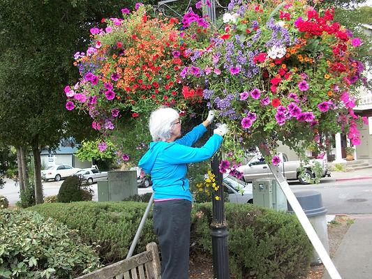 Street Tree Program - Basket Maintenance