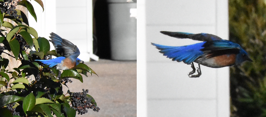 Projects - Bluebird Boxes