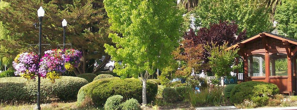 Street Tree Program - Donate