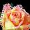 Thumbnail: ROSE FIESTA