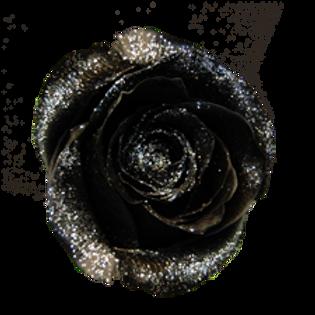 ROSE NOIRE ARGENT