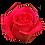 Thumbnail: ROSE TOPAZE