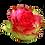 Thumbnail: ROSE MALIBU