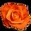 Thumbnail: ROSE TANGO