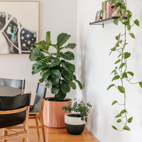 Interior Designer Spotswood