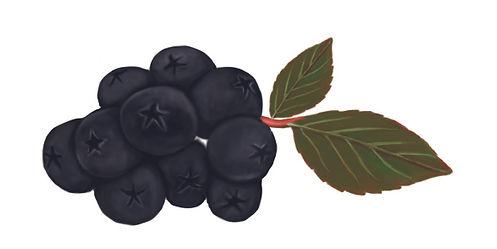aroniaberries.jpg