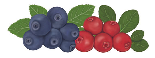 wild-nordic-berries-illustration.jpg