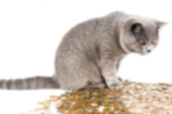 cat-1099697_960_720.jpg