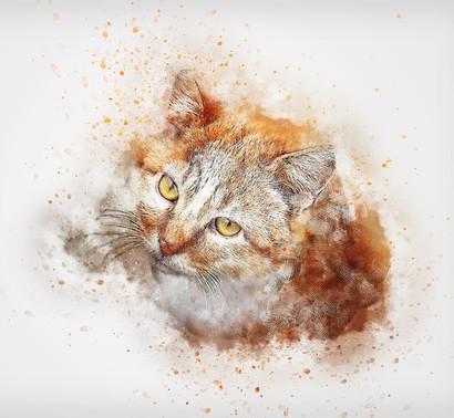cat-2343454_960_720.jpg