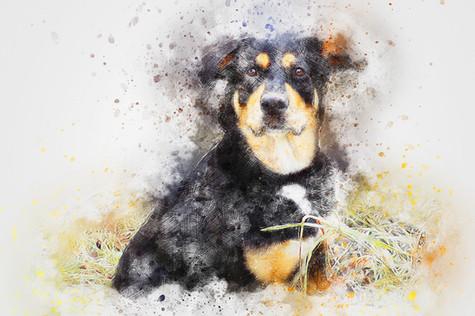 dog-2730527_960_720.jpg