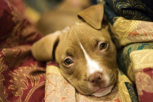 puppy-3091617_960_720.jpg