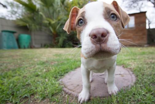 puppy-140306_960_720.jpg